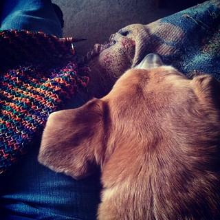 Sophie is pretty cuddly today... #dogstagram #houndmix #instadog #knitstagram #knitting