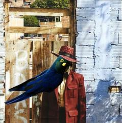 blue bird in love