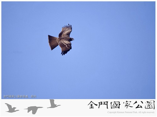 黑鳶-02