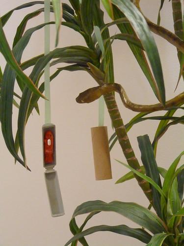 Prototype aerial bait cartridge with brown treesnake