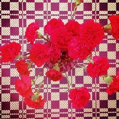 :heart:️ Carnation saturation :heart:️