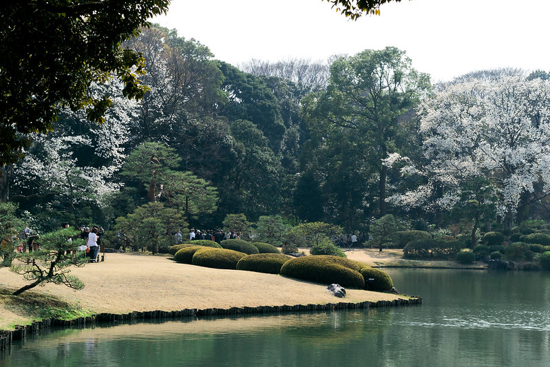 Rikugien Garden during Cherry Blossom season