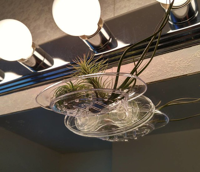 Soap dish as air plant holder