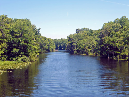 water forest river landscape scenery florida dunnellon