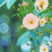 flowers * 花 by fukusuke-pon 福助ぽん