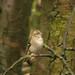 Garden Bird. by Peter Dale Hosey