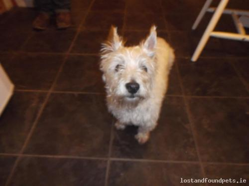 [Reunited] Wed, Apr 22nd, 2015 Found Female Dog - R339, Monivea, Galway