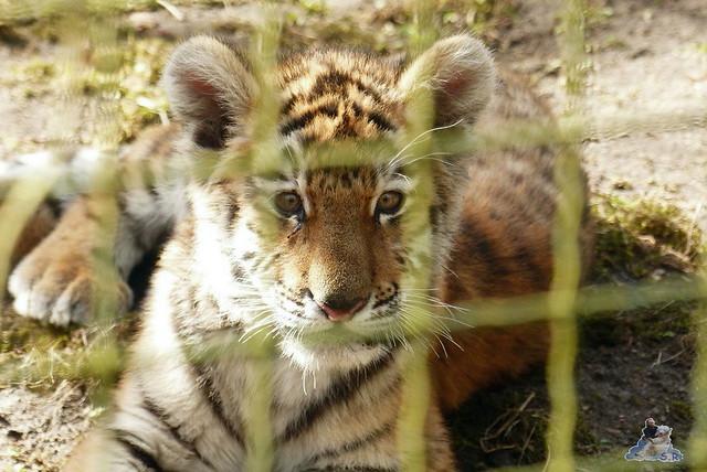 Zoo Eberswalde 22.03.2015   81