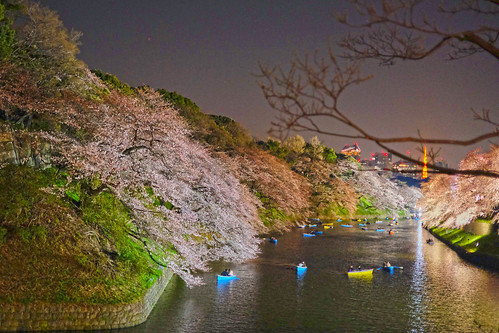 Sakura night moat 05
