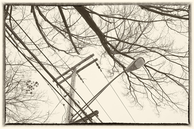 IMG_3791 Lamp and Branches