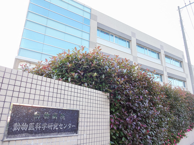 Photo:Nihon University Veterinary Research Center By Dick Thomas Johnson