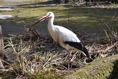 2015.04 SUISSE - ZURICH - Zoo