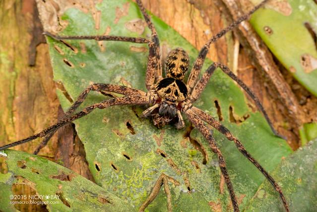 Huntsman spider (Sparassidae) - DSC_3568