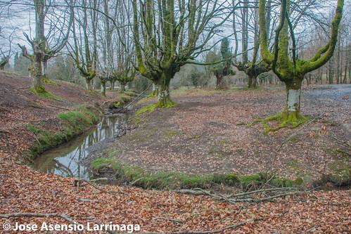 Hayedo de Otzarreta . Parque Natural de Gorbeia 2015 #DePaseoConLarri #Flickr -064