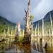 Troncos y arcoiris - Parque Tagua Tagua (Patagonia - Chile) by Noelegroj (4 Million views plus - Thanks to all)