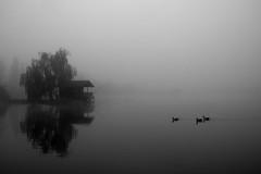 Ferrara Nebbia