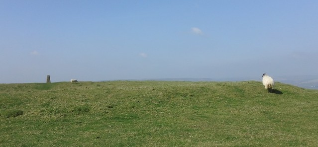 One trig. point, two sheep