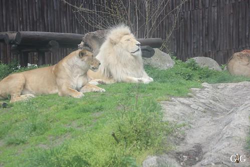 Zoo Bratislava 18.04.201518