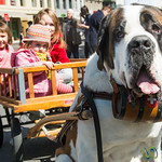 Saint Bernard in Basel, Switzerland
