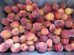 starr-160408-0715-Prunus_persica_var_persica-fruit_harvest-Hawea_Pl_Olinda-Maui
