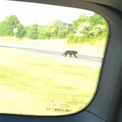 FYI to all of our Brambleton clients! There has been a Bear spotted in Brambleton off of Northstar and Shreveport. Please make sure all food, trash, kids and pets are inside!