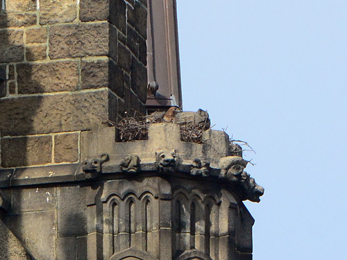 Cathedral Hawk Nest - 6267