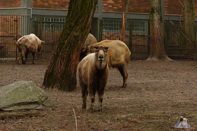 Tierpark Berlin 21.03.2015  177