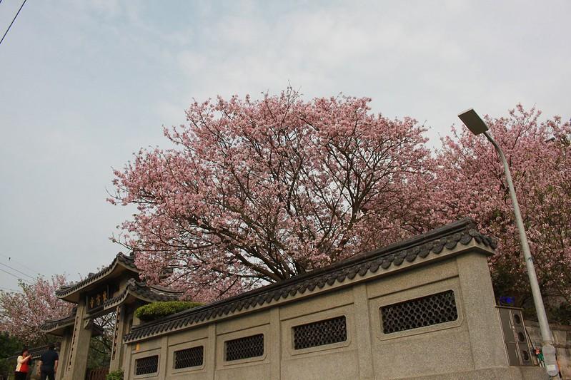 17度C在地景點春季推薦-東方室-櫻花 (29)