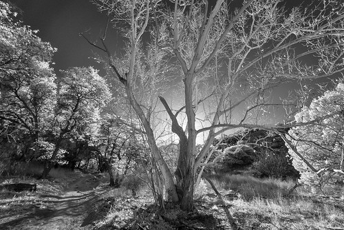 browncanyon huachucamountains coronadonationalforest cochisecounty arizona az usa infrared arizonasycamore