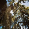 The beautiful trees of the South #spanishmoss