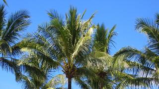 Thailand - Khao Lak - Palms at the beach