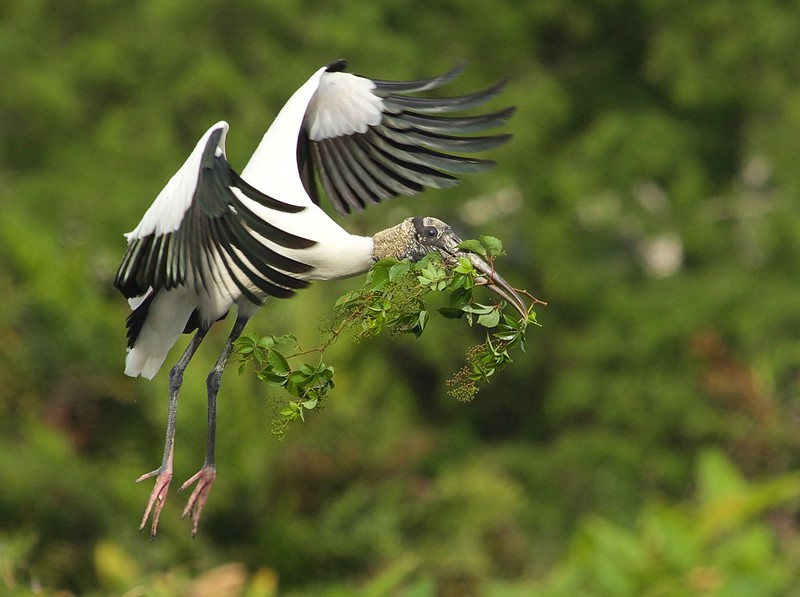 Wood Stork with furniture for the Mrs.