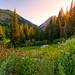 "Little Cottonwood Canyon by Scott Stringham ""Rustling Leaf Design"""