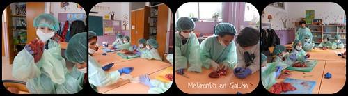 cirurxía 4
