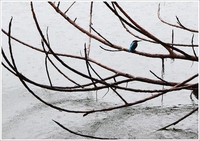 礁溪龍潭湖雨天漫步金礁溪礦泉水觀光工廠013-DSC_7757