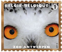 11 Zoo Timbre 1 Hibou