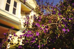 Springtime Bernalwood