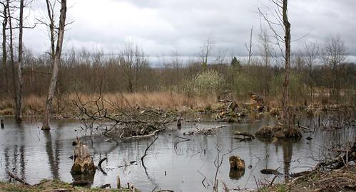 Dead tree water III