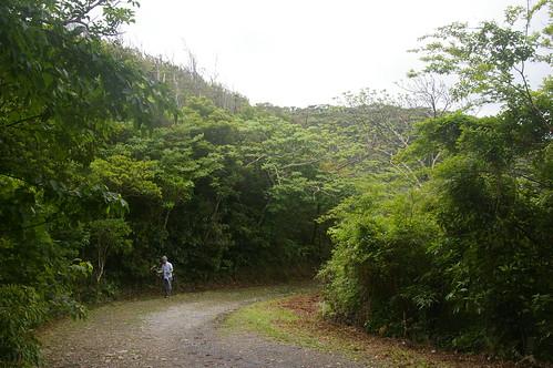 奄美大島 金作原原生林