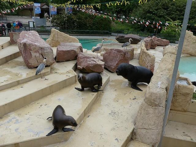 Mähnenrobben, Zoo Heidelberg