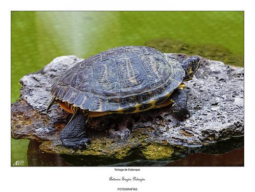 Flickriver most interesting photos from galapagos - Estanque para tortugas ...