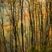 Hidden by Mark Littlejohn