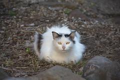 RBC (Random Brooklyn Cat)