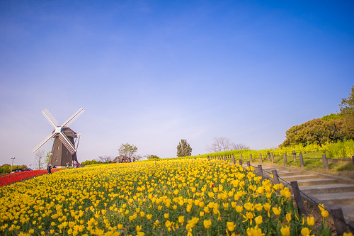 park blue red sky flower green nature windmill yellow japan stairs landscape ed nikon farm f14 14 sunny tulip osaka 24 24mm af nikkor afs tsurumi ryokuchi f14g d3s