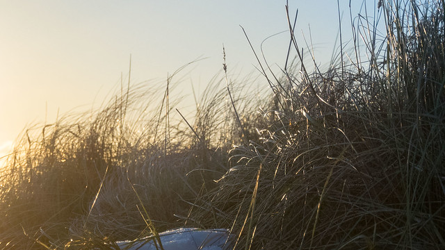 Header of marram