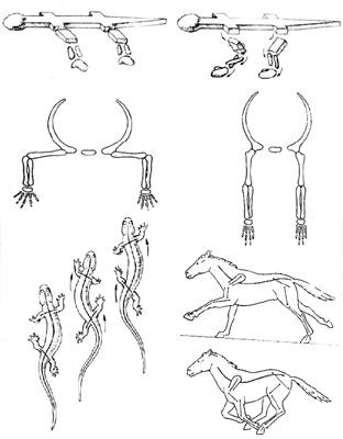 Скелет ящерицы с контурами
