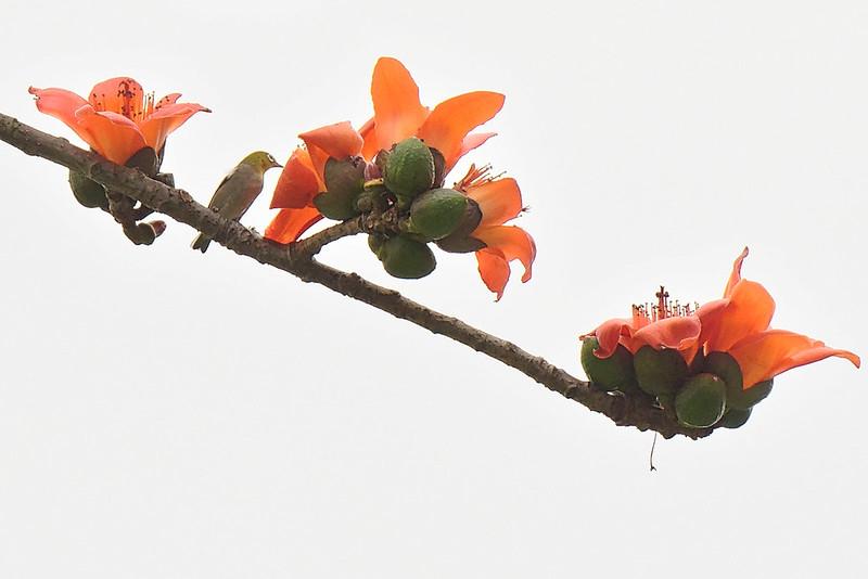 Bird&Flower