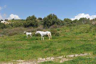 Sciacca, Sicily April, 2015 234
