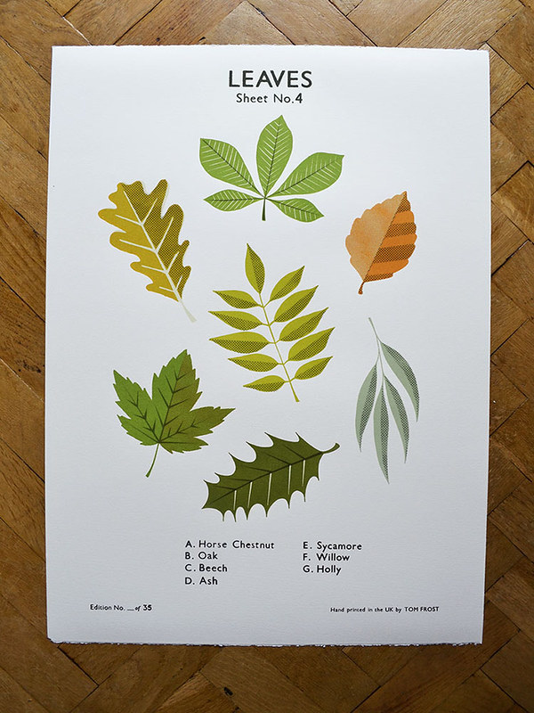 Leaves School Chart by Tom Frost