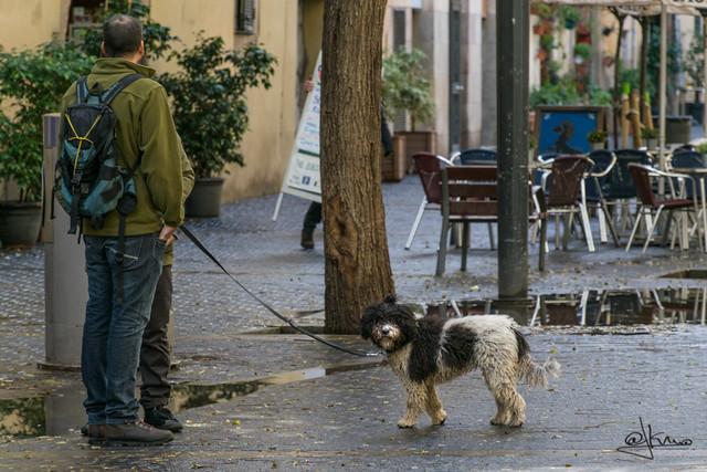 Un día de perros. El Born, barri de la Ribera, Barcelona